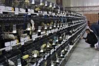 EURO - Kocaeli'de  5 Bin Kanarya Yarıştı
