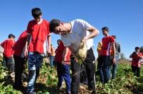 Rizeli Gençler Maraş'ta Horonla Pancar Söktü