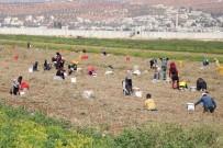 REJIM - Savaşın Gölgesinde Ekmek Savaşı