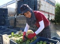 TARIM İŞÇİSİ - Tarımın Yükünü Çeken Kadınlar Çalışma Şartlarından Dertli