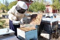 ORGANİK BAL - 3 Kovan İle İşe Başlayan Ev Hanımı Yılda 1.5 Ton Bal Üretiyor