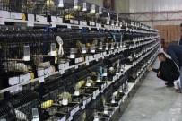 EURO - 5 Bin Kanarya 400 Kategoride Yarıştı