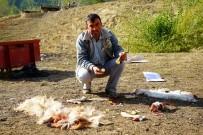 MURAT ÖZÇELIK - Ayılar 30 Küçükbaş Hayvanı Telef Etti