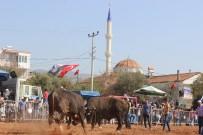 PARA ÖDÜLÜ - Boğa Güreşlerinin Finali Balıkköy Arenasında Yapıldı