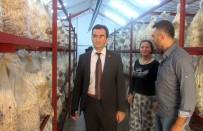 İSTIRIDYE - Edremit'te İstiridye Mantarı Genç Girişimcilerin Geçim Kaynağı Oldu