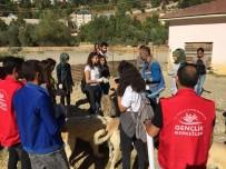 MUNZUR - Gönüllüler, Sokak Hayvanlarını Besledi