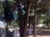 Mezarlıklarda Kuşlara Yuva