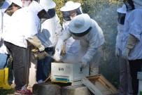 SAHTE BAL - Arı Ölümleri İklim Değişikliğinden Kaynaklanıyor