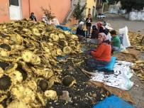 DÖVME - Simav'da Ayçiçeği Hasadı Başladı