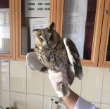 İPEKYOLU - Tedavisi Tamamlanan Baykuş, Doğaya Bırakıldı