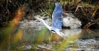 NEVZAT CEYLAN - UNESCO Adayı Kuş Cenneti'ndeki Foto Safariye Büyük İlgi