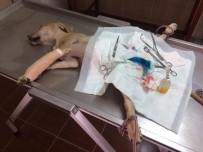 SOKAK KÖPEĞİ - Ayağı Kırılan Köpek Tedavi Edildi