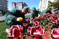 BAĞCıLAR BELEDIYESI - Bağcılar'da Park Ve Bahçeler Kışa Dayanıklı Çim Ve Çiçeklerle Donatılıyor