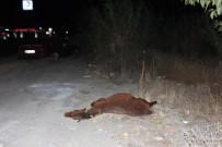 ADNAN MENDERES ÜNIVERSITESI - Gece Yarısı Evden Kaçan At Otomobile Girdi 2 Yaralı