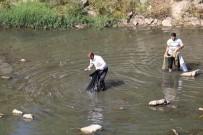 ŞAHIT - Dicle'de Toplu Balık Ölümleri