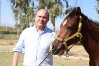HEART - İngiliz Yarış Atları Lüks Otomobil Fiyatına Satılacak