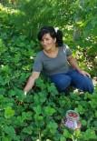 MıSıR - Silaj Makinesi Genç Kadının Kollarını Koparttı