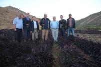 HALUK CÖMERTOĞLU - TÜBA Üyeleri Arapgir'de İncelemelerde Bulundu
