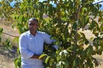 Adilcevaz'da Ceviz Yetiştiricileri Birliği Kurulacak