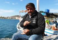 YUNUS BALIKLARI - Balıkçılar Yunuslardan Şikayetçi