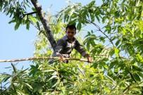 Bu Haber Ağaca Tırmanabilen Ve Denge Sorunu Yaşamayan Erkekler İçin