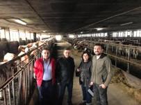 TARıM - Kula'da Süt Üreticileri Destekleniyor