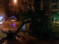 Ağaç Cadde Ortasına Devrildi