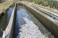 GÖKPıNAR - Havuzdaki Su Biranda Kahverengine Döndü, Zarar 130 Bin TL