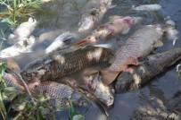 TÜRKIYE ŞEKER FABRIKALARı - Türkiye Şeker Fabrikası'ndan 'Balık Ölümleri' Açıklaması