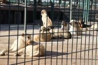 MUSTAFA ASLAN - Hayvan Barınağında 408 Sahipsiz Köpek Tedavi Edildi