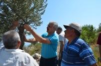 Mersin'de Delice Aşılamalarında Hedefler Aşıldı