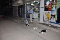 SIIRT BELEDIYESI - Siirt'te Sokak Hayvanları Unutulmadı