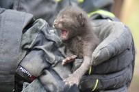 Çatıda Sıkışan Yavru Kediyi İtfaiye Kurtardı