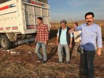 Başkan Gülenç, Pamuk Hasadını İnceledi
