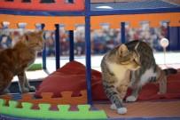 Kedilerin De Bir Parkı Var