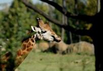 SONBAHAR - Sonbaharda Hayvanat Bahçesine Büyük İlgi