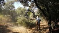 AĞAÇ KESİMİ - Yaya Yolu Yapılacak Diye 50'Ye Yakın Ağaç Kesildi İddiası