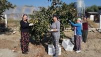 EMINE ERDOĞAN - 'Cennet'ten Gelen Tatlar' Projesi İle Emine Erdoğan'ın Dikkatini Çekti