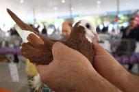 HAYVAN SEVERLER - Güvercinler Görücüye Çıktı
