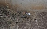KORSAN GÖSTERİ - Okul Bahçesinde Öğrenciler 7 Molotof Buldu