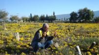 200 Yıllık Mezarlık Her Yıl Sarıya Bürünüyor