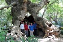 Anıt Ağaçların Envanteri Çıkarılıyor