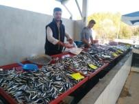 Balık Bollaştı, Fiyatlar Düştü