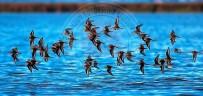 RAMAZAN YıLDıRıM - Kuş Cenneti'nden Objektiflere Yansıyanlar