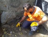 CENİN - Mezarlıkta çöken toprağı eşeleyince korkunç gerçek ortaya çıktı