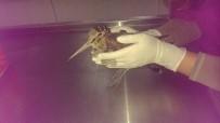 Yaralı Bulunan Çulluk Kuşu Tedavi Altına Alındı