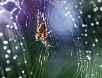 'Yılan ve örümcek korkusu evrim kökenli'