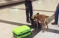 MÜNİH - Alman Yolculara Havalimanında Köpekli Arama