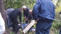 Armut Ağacından Düşen Şahıs Öldü