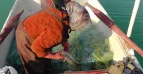 BEYŞEHIR GÖLÜ - Beyşehir Gölü'nde  'Anadolu'ya Ağ Atanlar Açıklaması Kadın Balıkçılar' Projesi